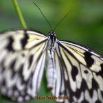 Bilder Garten der Schmetterlinge Schloss Sayn, Bendorf-Sayn