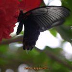 Bilder Garten der Schmetterlinge Schloss Sayn, Bendorf-Sayn 067