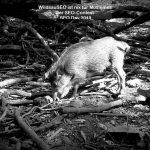 Bilder Video zur WildsauSEO? Definition & Wissenswertes